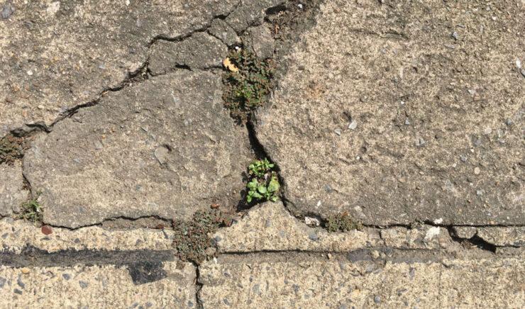 Can Epoxy Crack Repair Fix My Driveway? Help!